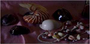 Shells and items made from shells etc