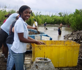 Chantal - Community JGR helps with the Mangroves