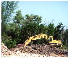 Mangrove Destruction.jpg