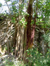 Roots and other vegetation on the wall