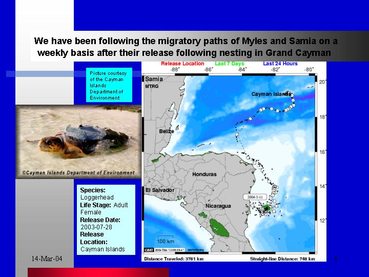The turtle satellite transmitter programme