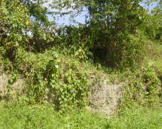 Vegetation on the wall